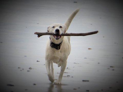 Loslassprozess Teil 2 – Der Hund und das Stöckchen
